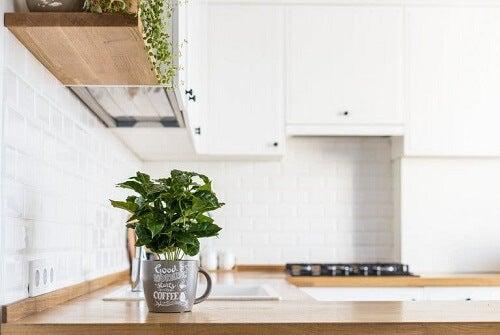 Piante aromatiche fresche in cucina!