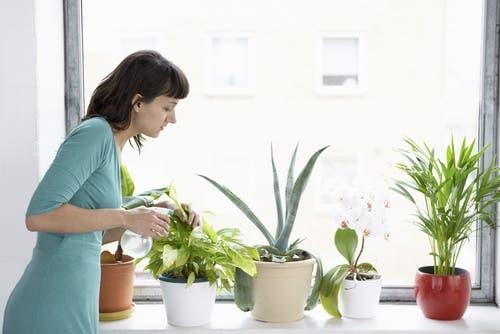 Ragazza che innaffia le piante