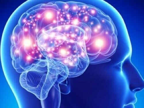 Illustrazione del cervello
