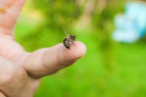 Puntura di ape: come intervenire?