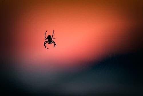 Veleno di ragno per ridurre i danni cerebrali