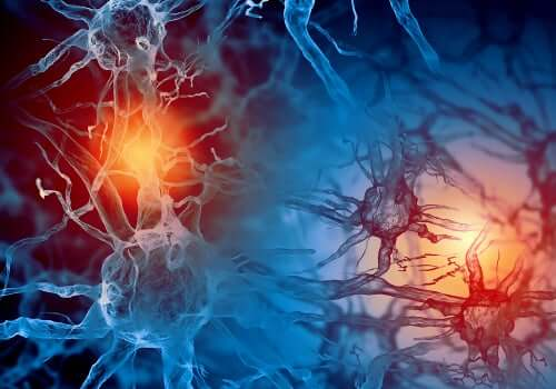 Scariche neurali nell'epilessia.