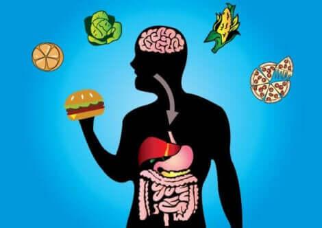 Flessibilità metabolica e alimenti.