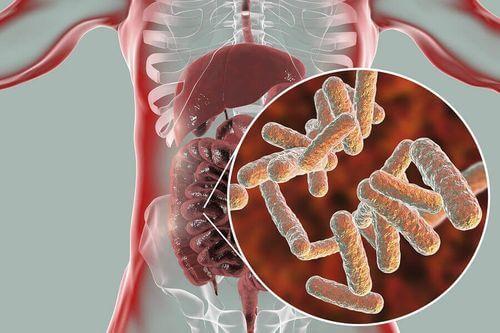 Funzioni del microbiota nell'apparato digerente.