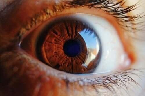 L'occhio si pulisce da solo: cosa dice la scienza
