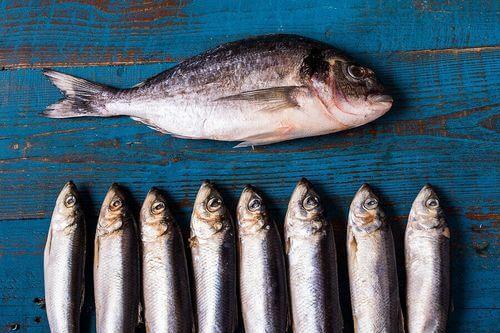 Pesce azzurro nella dieta per lo anziano.