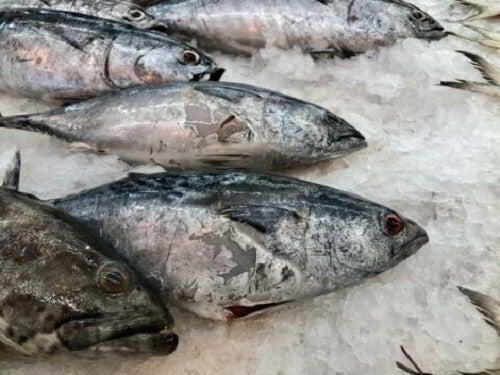 Pesce crudo portatore di potenziali batteri dannosi per l'uomo.