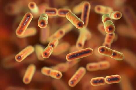 Batteri intestinali sani per l'organismo.