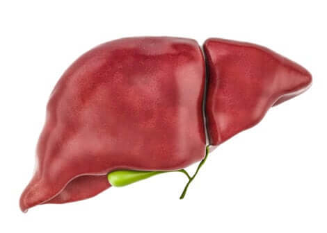 Il fegato elimina le tossine.