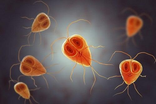 Malattia da protozoi e sintomi.