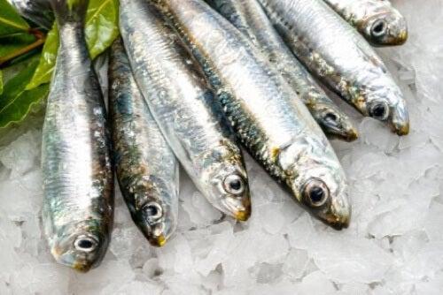 Sardine fresche e benefici.