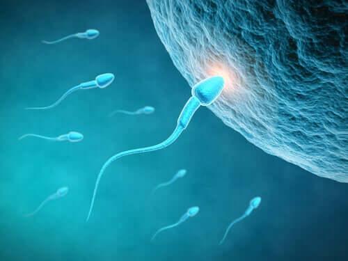 Qualità dello sperma e alimentazione