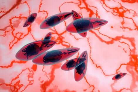 Parassita che causa la toxoplasmosi.