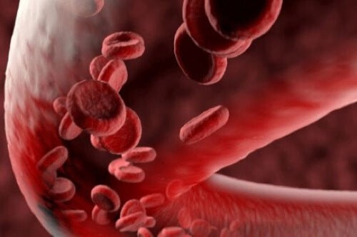Istamina e vasi sanguigni.