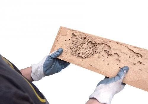 Tarli del legno: come individuarli e trattarli