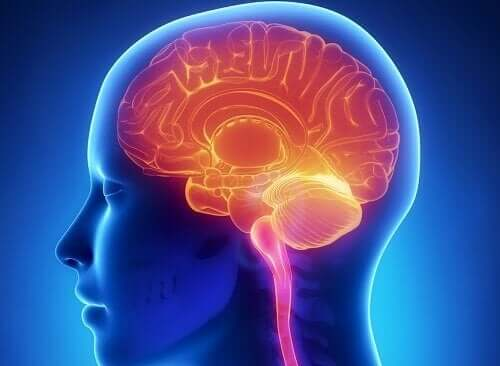 Dimensioni del cervello.