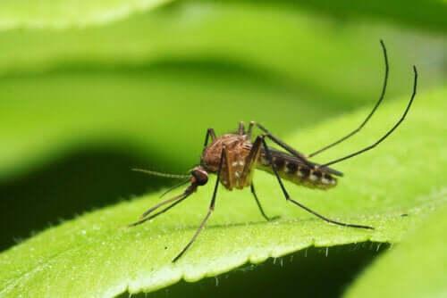 Malattie trasmesse dalle zanzare: ecco le principali