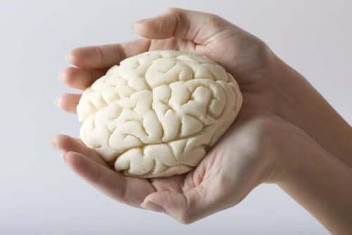 Miniatura di un cervello umano.