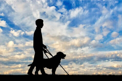 Disabilità visiva: cosa c'è da sapere