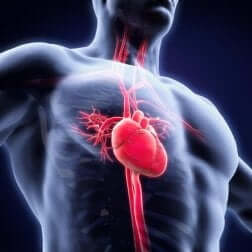 Astenia e sistema cardiovascolare.