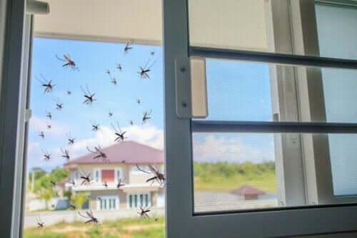 Rimedio naturale contro le zanzare: il basilico