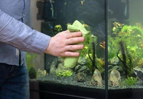 Pulire l'acquario in modo semplice
