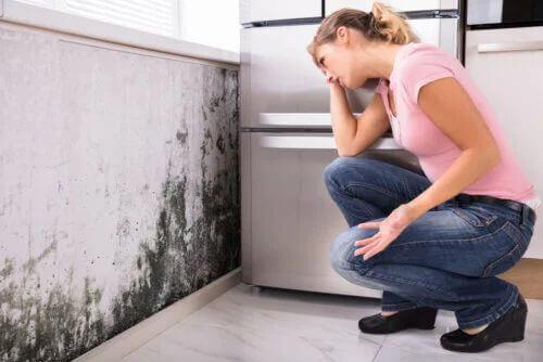 Muffa in casa: quali sono i rischi per la salute?