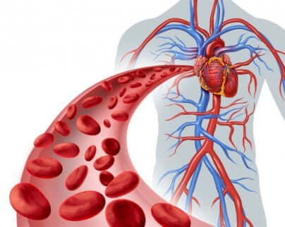 Sangue venoso nel corpo.