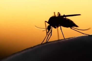 zanzara in primo piano.