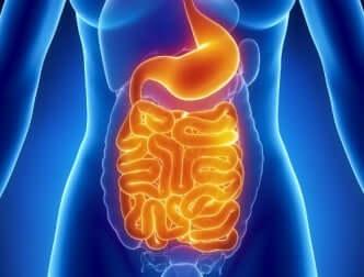 Congestione digestiva e stomaco.