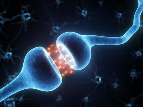 Connessioni neuronali.