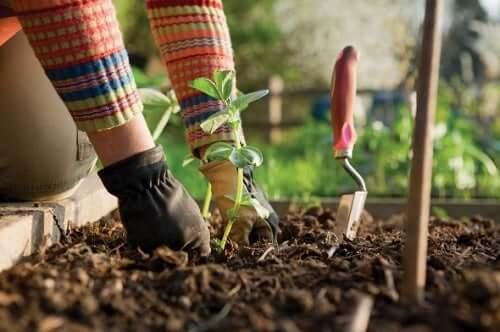 Curare il giardino.