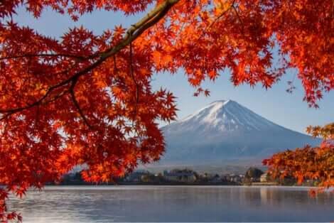 Monte Fuji e acero giapponese.