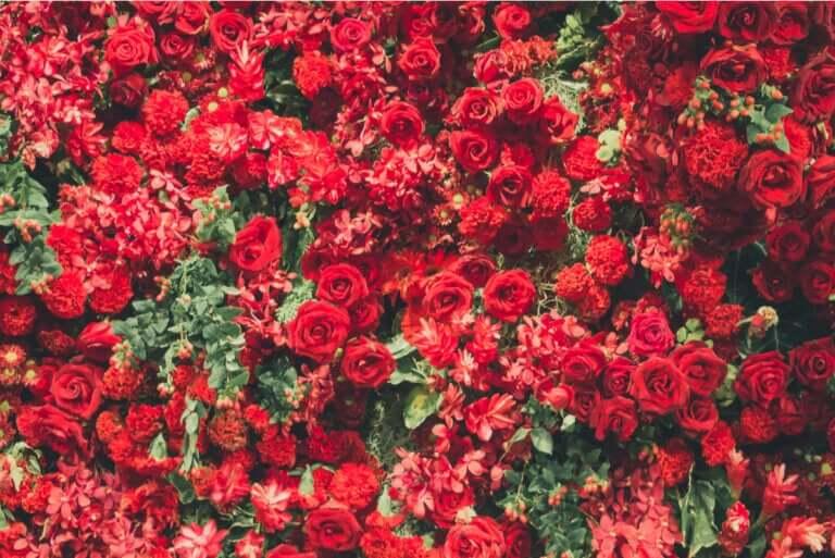 Piante dai fiori rossi per ravvivare gli ambienti