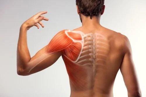 Anatomia della spalla.