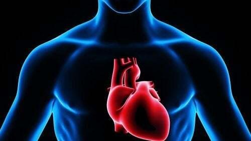 Rappresentazione del cuore.