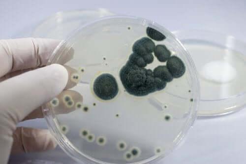 Allergia alla penicillina: come si manifesta?