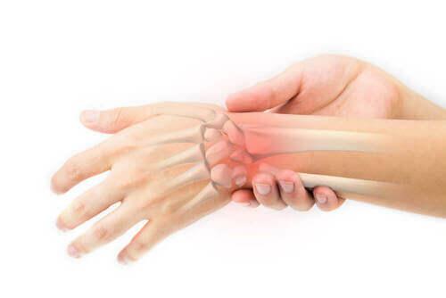 Ossa della mano.