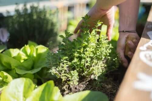 Coltivare piante sul balcone: 10 consigli