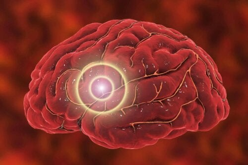Cervello e sistema nervoso