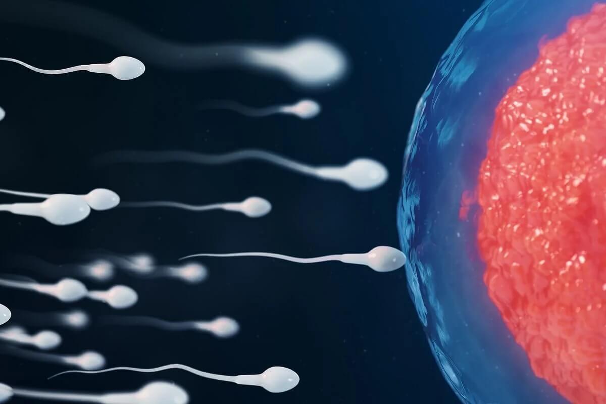 Spermatozoi e la fecondazione.