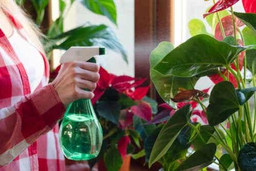 Piante d'appartamento anti umidità: belle e utili