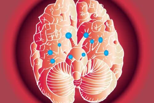Nervi cranici: quali funzioni hanno?