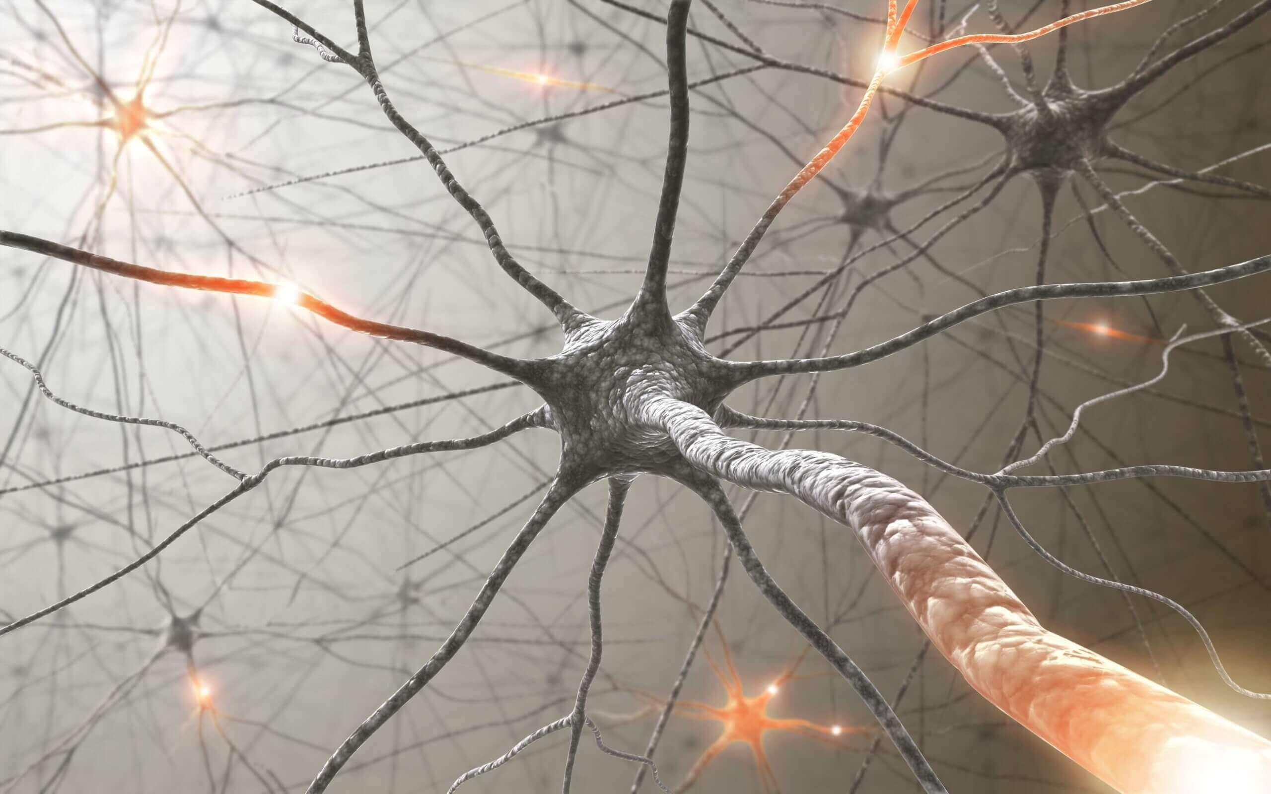 Neuroni dentro nervo.