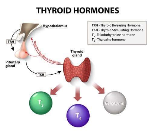 Ormoni tiroidei.