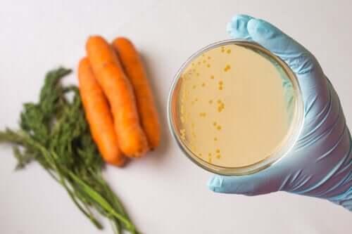 La sicurezza alimentare in cosa consiste?
