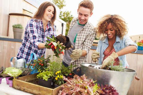 Amici che fanno giardinaggio.