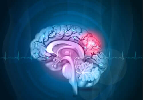 Amigdala nel cervello.