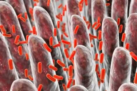 Batteri nell'intestino permeabile.