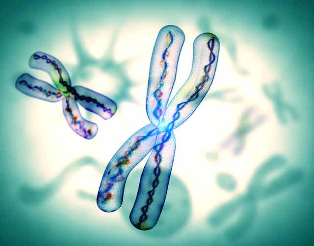 Cromosomi.